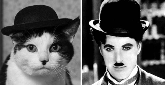 celebs_and_their_strikingly_similar_animal_doppelgangers_640_06