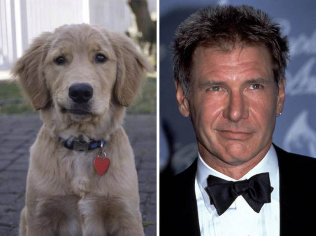 celebs_and_their_strikingly_similar_animal_doppelgangers_640_45