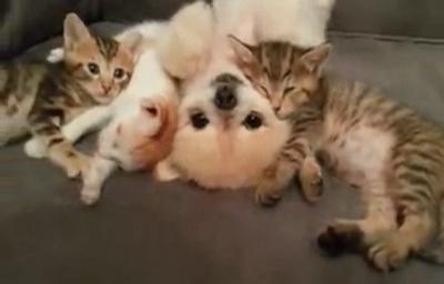 子ネコもワンちゃんが大好き♥