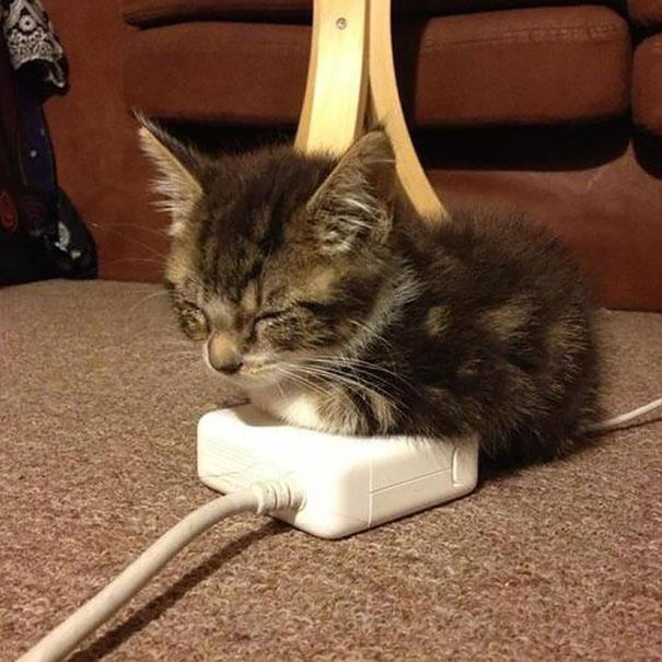 cats-enjoying-warmth-50__605