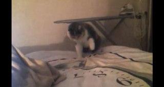 許せない!飼い主が買ってきた「あるもの」が気に入らなかったネコさん・・・一体何が気に入らなかったの??