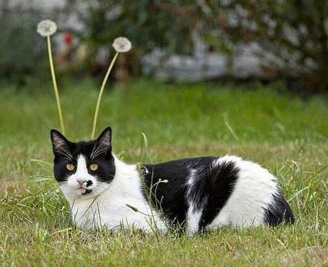 タイミングバッチリで撮影出来たネコさんの奇跡の写真10選-10