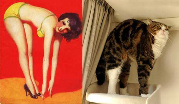 Cats-Vs-Pinup-Models-03