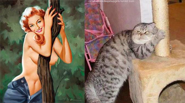 Cats-Vs-Pinup-Models-16