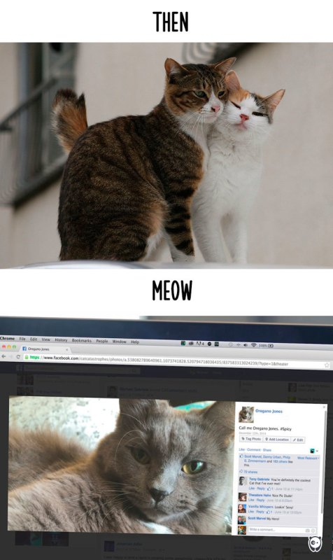 Cats-then-now-funny-technology-change-life-15-5716342bb4884__700