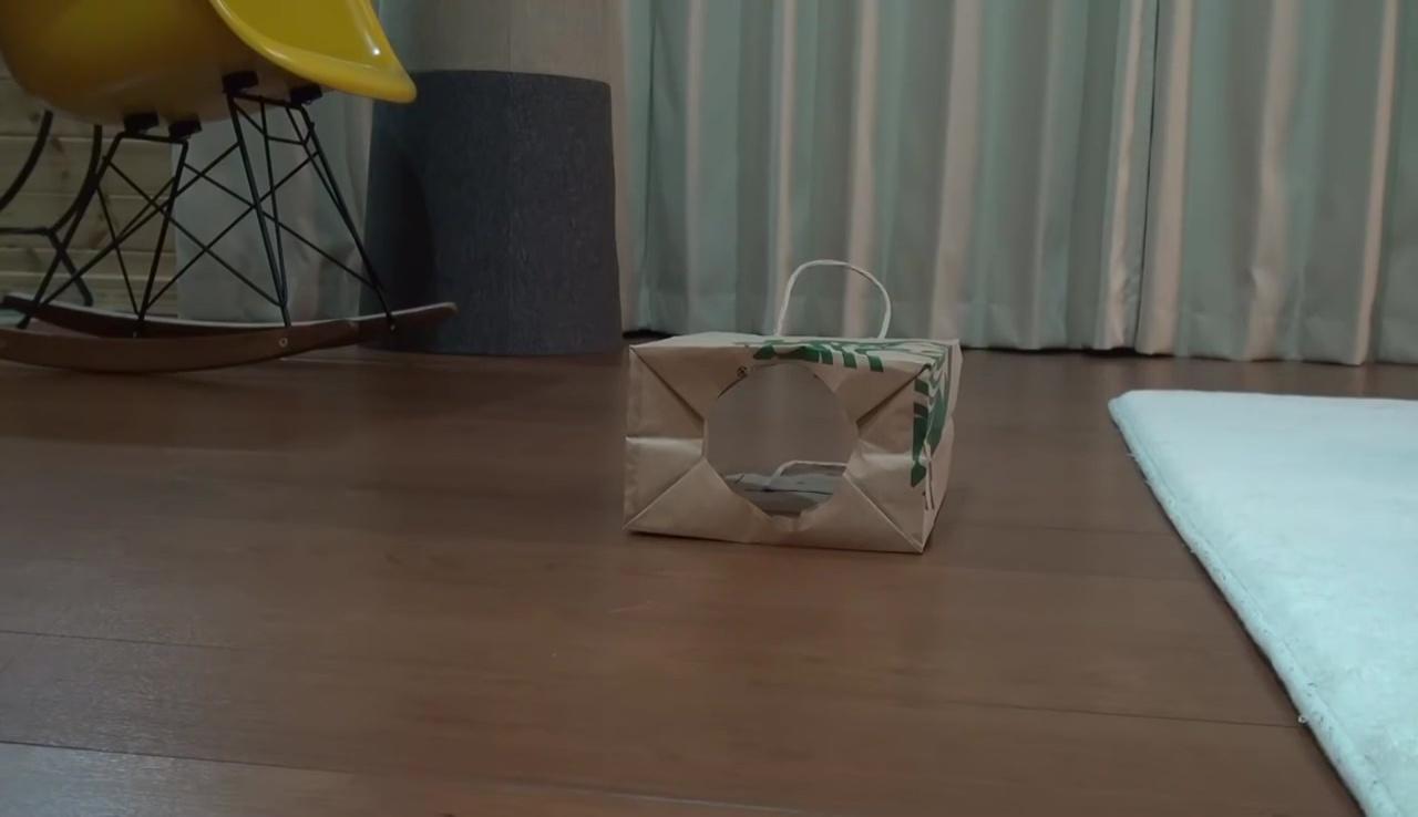 01-紙袋に収まりきったネコさんのドヤ顔が可愛い!何度でも見たくなる