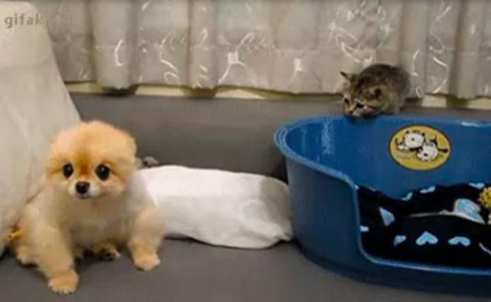 犬さんにイタズラしちゃお!-子ネコのイタズラは犬にはバレバレ0