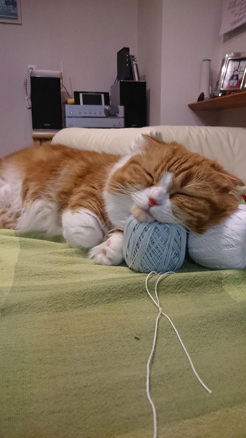 最近発見したぴったりな枕