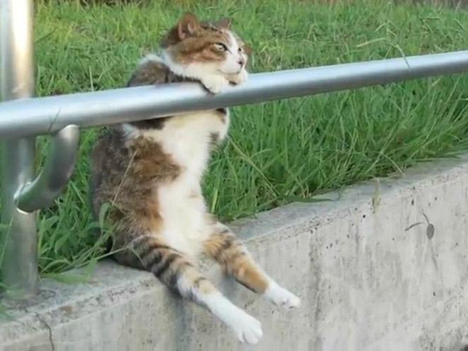 sitting-cats1