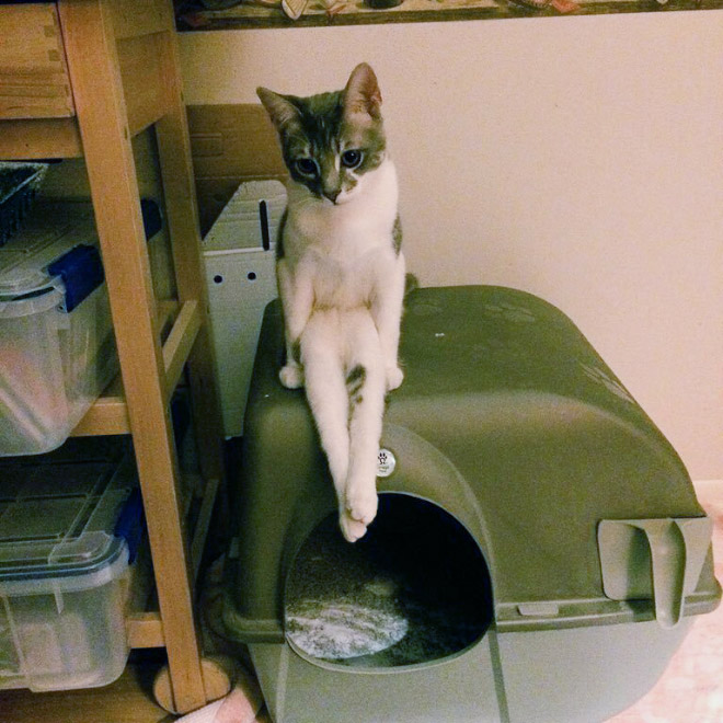 sitting-cats15
