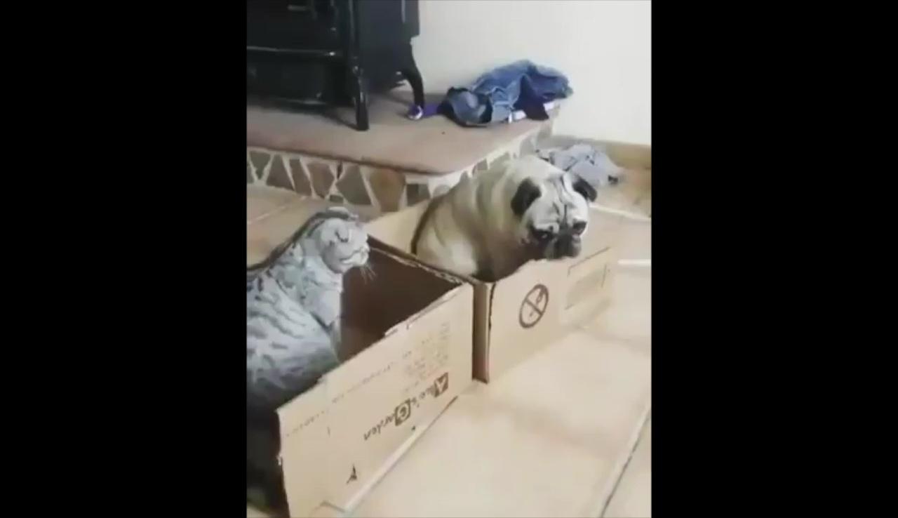 仕方なく隣の箱に移ったワンちゃん。
