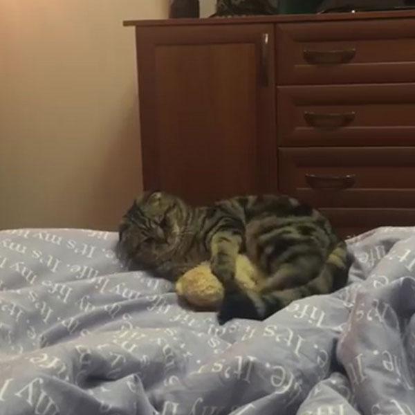 02-ぬいぐるみを抱っこしようと思ったネコさん・・・あれ?