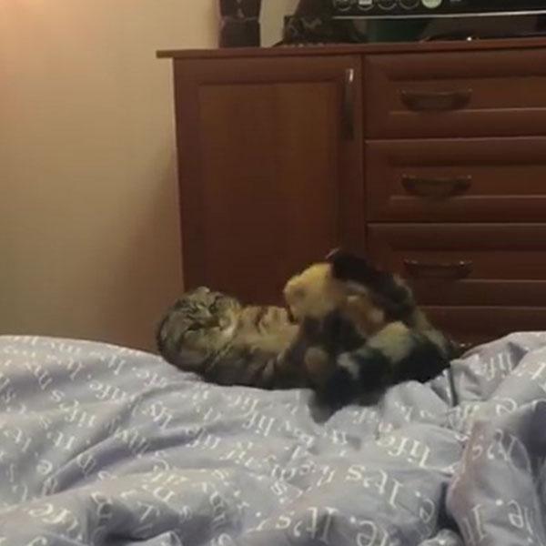 04-ぬいぐるみを抱っこしようと思ったネコさん・・・あれ?