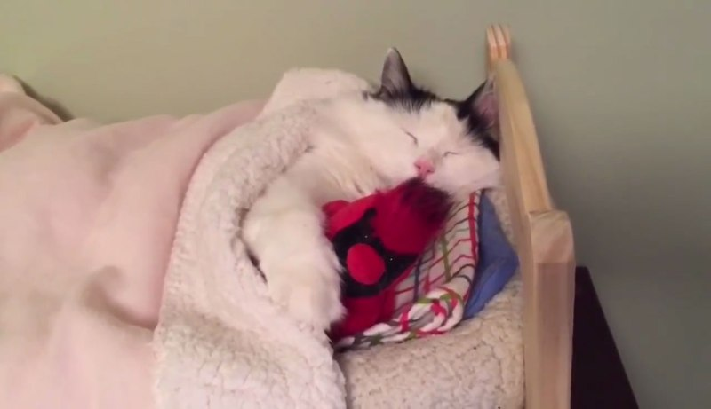 04小さなベッドでウトウトするネコさんにほんわか癒される