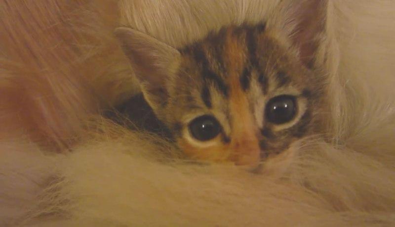 02仲良しのわんちゃんのしっぽにくるまってるネコさんがとっても幸せそう♪