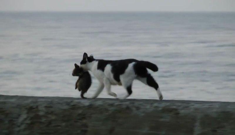 04あふれる親子愛を感じさせるハートフルな物語!海辺を歩くネコさん親子の姿に胸が熱くなる