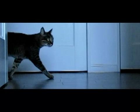 022匹のネコさんタッグが贈るふしぎと元気の出るエンターテイメント!