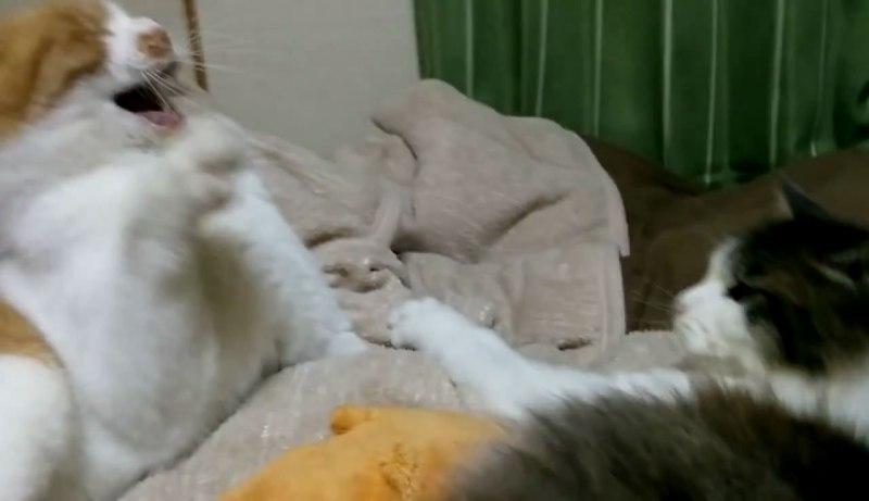 02「一体何があったの?!」喧嘩中になにかを悟り落ち込むネコさんに笑いが止まらない!