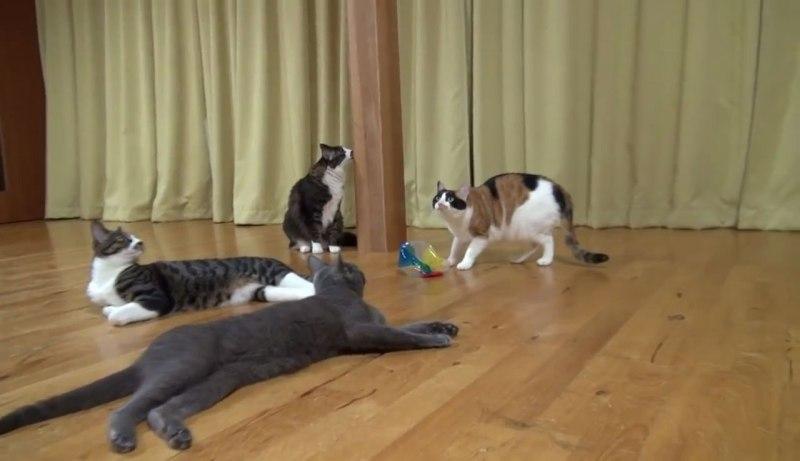02たいへんだぁー(゜□゜)Σ!!雷にびっくりしたネコさんが驚くべき瞬発力で逃げていく!!
