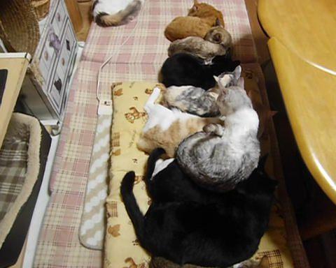 02-お行儀よく並んで寝ているネコさんたちそこへ送れてやって来たヤツが・・・