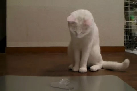03「にゃんだこれは??」はじめて氷をみたネコさんの摩訶不思議な対応がおもしろい♪