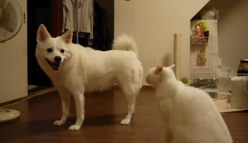 02イヌさんに文句を言うネコさん!しかしイヌさんは聞く耳を持たず・・・。大激怒するネコさんに取ったイヌさんの行動とは??