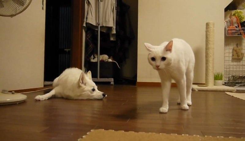 05イヌさんに文句を言うネコさん!しかしイヌさんは聞く耳を持たず・・・。大激怒するネコさんに取ったイヌさんの行動とは??