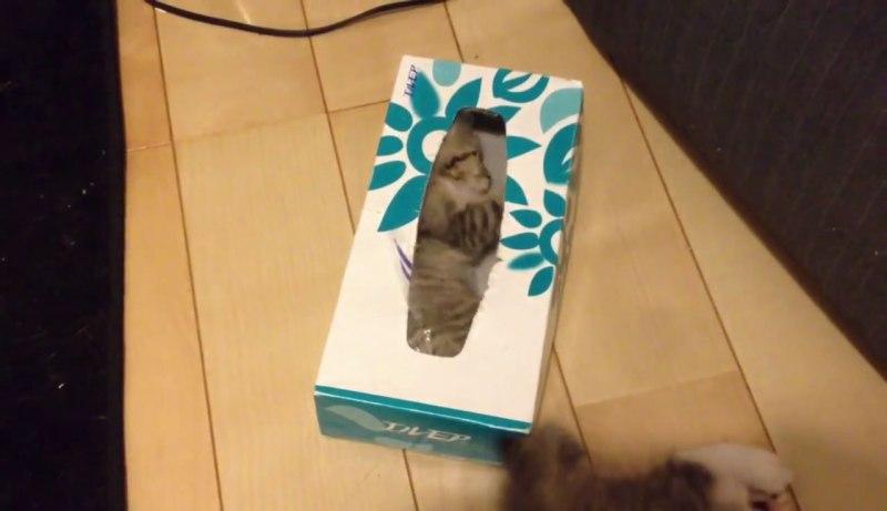 04遊びじゃなかった!子ネコさんの下に注目!ティッシュ箱の中で起きていたこととは??