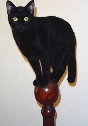 ネコさんのとっても凄いバランス感覚が分かる写真10選+2枚01