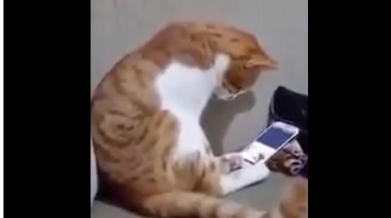 猫がスマホを見てたら亡くなったご主人の映像が・・・その時 猫の行動が泣ける | チャンネル「てみた」