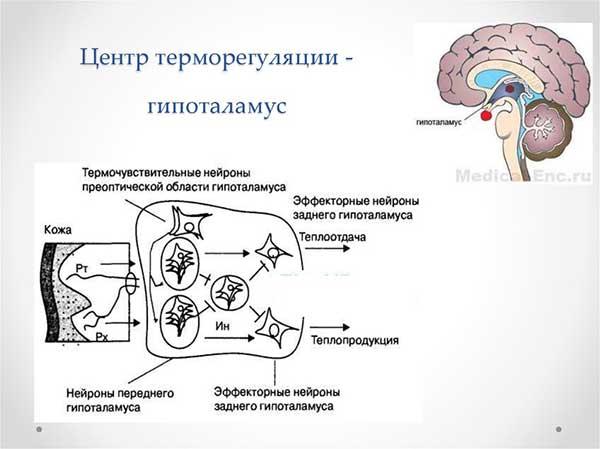 se răcește în mod permanent celulele grase)