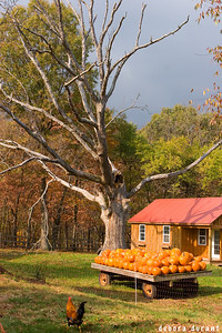 pumpkins and dead tree and stormy sky