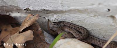 snake in garden