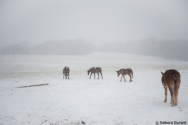 Darcy, Tally, Gloria and Sal heading out into the snowy day