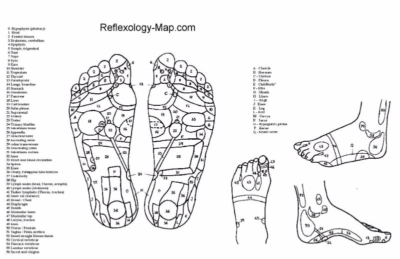blank foot diagram 1975 fj40 wiring 31 printable reflexology charts maps template lab free chart 06