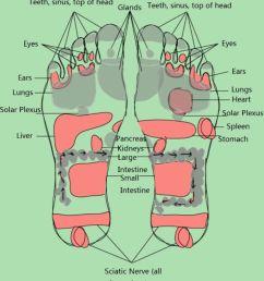 free foot reflexology chart 09 [ 800 x 1108 Pixel ]