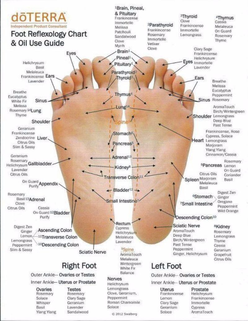 foot nerve endings diagram 6 pin rocker switch wiring 31 printable reflexology charts & maps - template lab