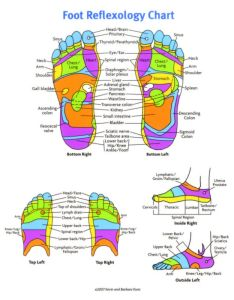 Free foot reflexology chart also printable charts  maps template lab rh templatelab