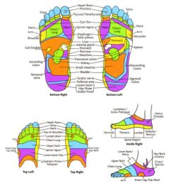 free foot reflexology chart 21 [ 800 x 1000 Pixel ]