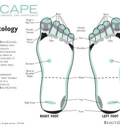 31 printable foot reflexology charts maps template lab blank football pitch diagram blank foot diagram [ 1165 x 900 Pixel ]