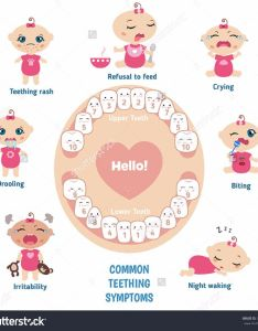 Free baby teeth chart also printable charts  timelines template lab rh templatelab
