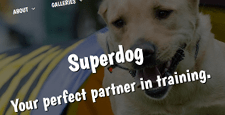 best wordpress themes for pets feature