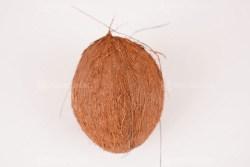 Ripe coconut photo