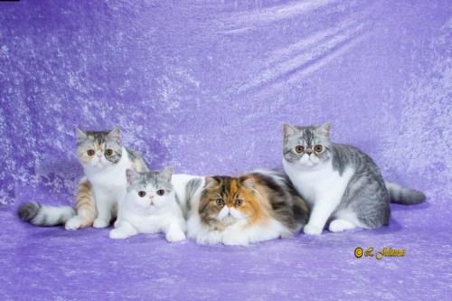 Venus, Snowman, Josephine, Orion