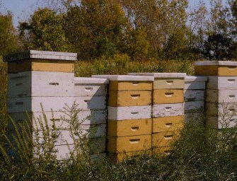 Pruitt-Igoe Bee Sanctuary: A Conversation with Juan William Chávez