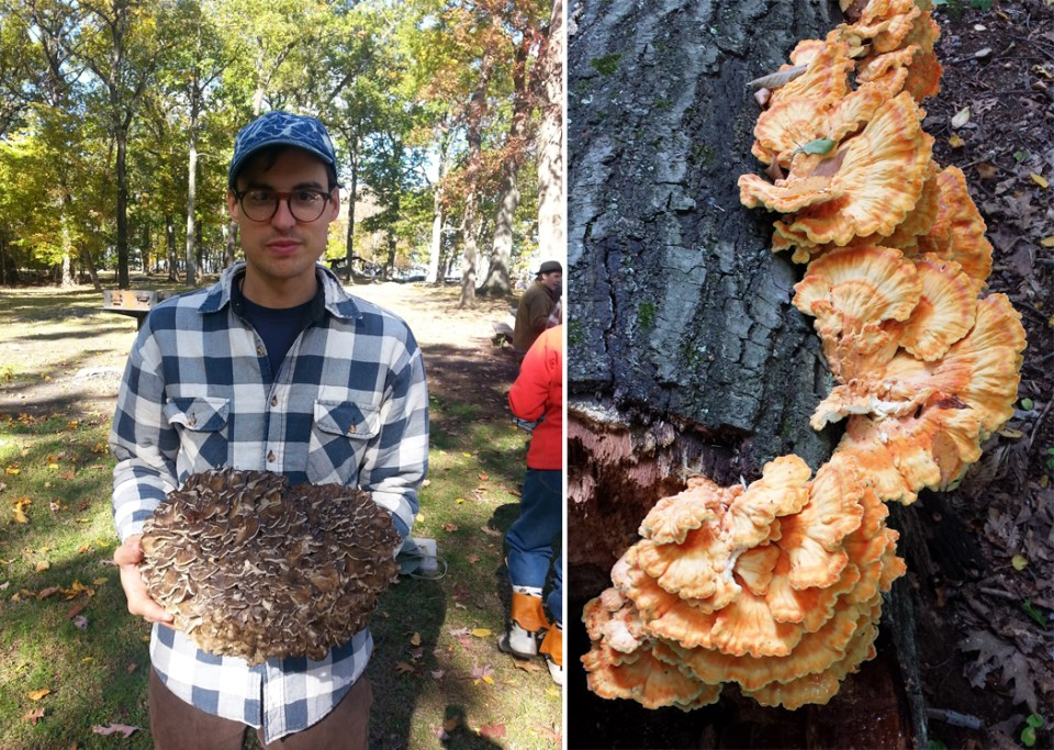 left: Ben with hen-of-the-woods. right: Chicken-of-the-woods.