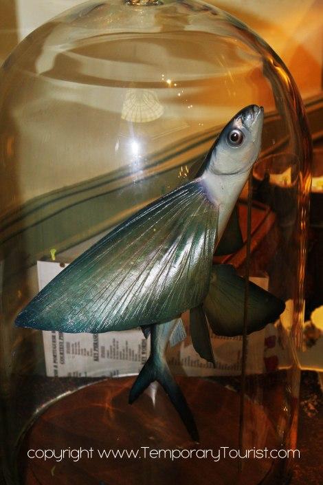 fishwere