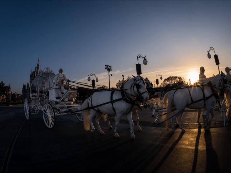 Magic Kingdom Wedding 3