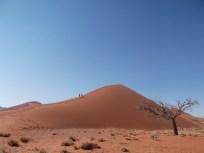 dune 45 _-