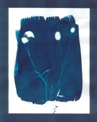 cyanotypes fleurs - 01